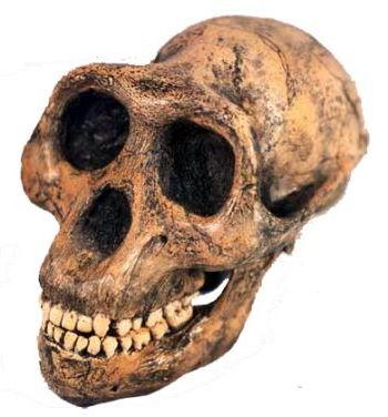 lucy-skull.jpg