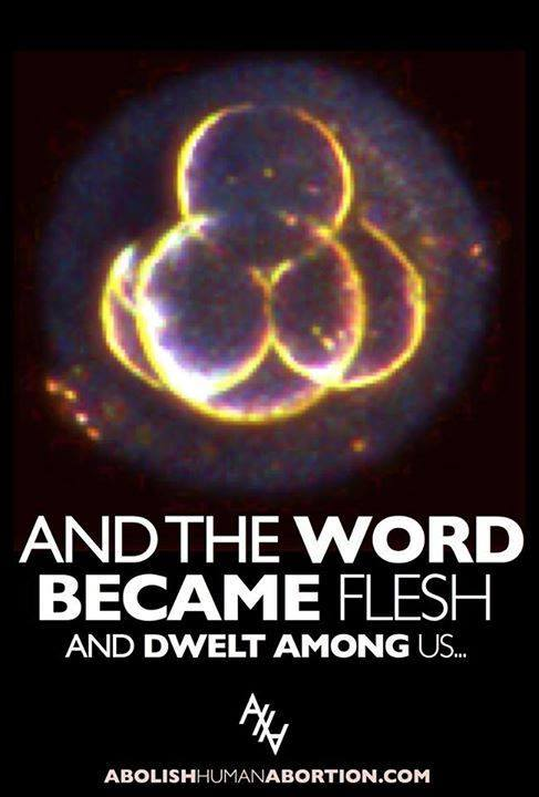 Incarnation Embryo: The Word became flesh, image of day-old embryo