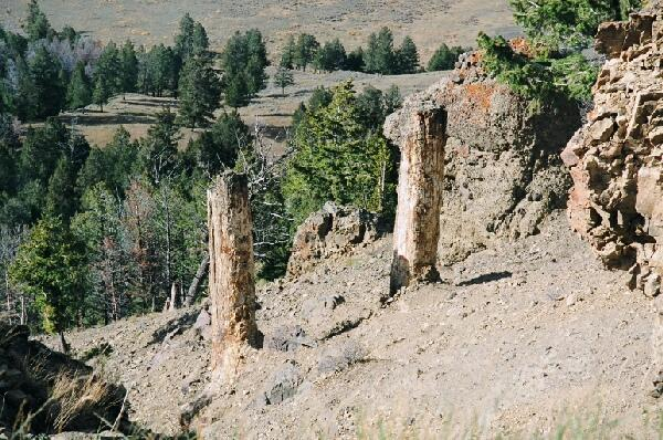 Photo of two of Yellowstone's approx. 5k-year-old petrified trees.