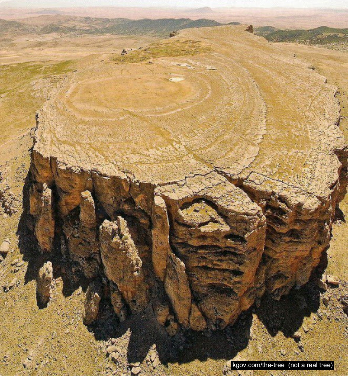 Not a photo of a tree but a tree-like geological structure