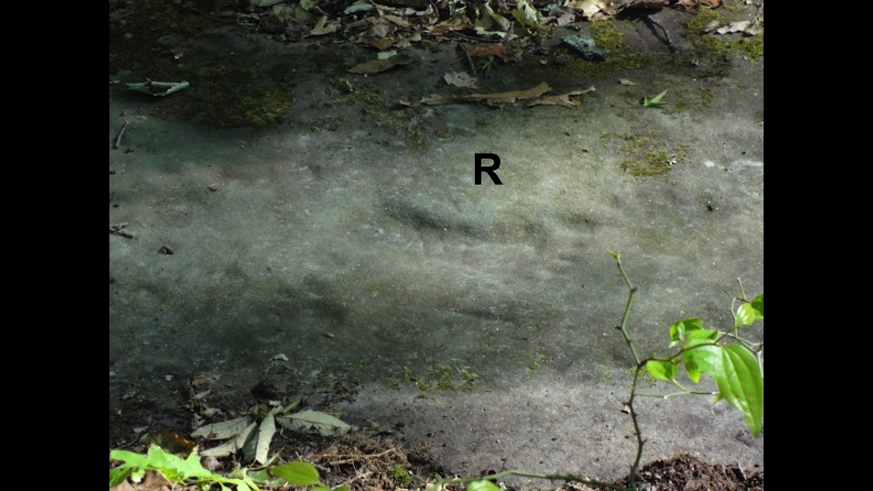 RSR's photos of human prints in Pennsylvanian sandstone in McKee, KY