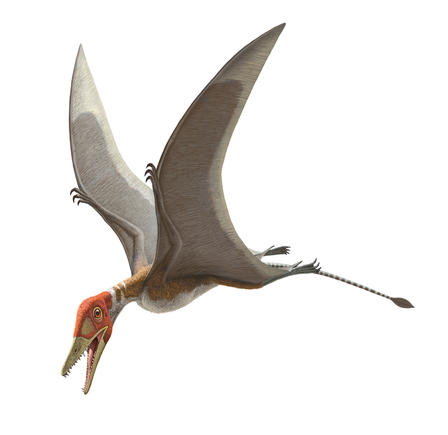Pterosaur allegedly evolved good wings from increasingly bad legs.